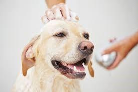 汚れがひどい場合は目や口の周りに気を使いながら洗いましょう。